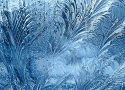 frozen  window-glass